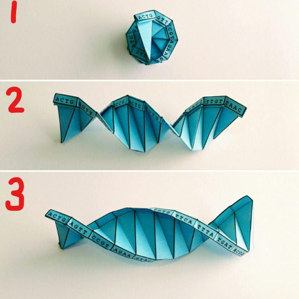 DNA Origami - photo#17
